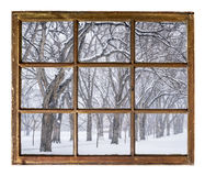 Alley of old elm trees in blizzard. Alley of old elm trees in a snow blizzard as seen through vintage, grunge, sash window with dirty glass royalty free stock images