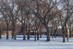 Alley of old elm trees at university campus. Alley of old elm trees - historical Oval at Colorado State University campus, Fort Collins, winter morning royalty free stock photo