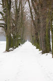 Alley. Old linden alley in the winter Royalty Free Stock Photo