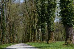 Alley of old trees, Bavaria Royalty Free Stock Photography