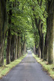 Alley with old trees Royalty Free Stock Photo