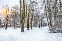 Alley of originally formed trees. Winter time in city park Stock Photos