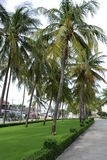 Alley of palm trees Royalty Free Stock Images