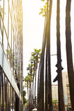 Alley of palm trees on Hollywood Boulevard in Los Angeles. City Stock Images
