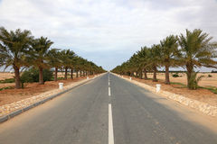 Alley with palm trees in Qatar Stock Photos