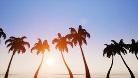 Alley of palm trees on sunset. Background stock footage