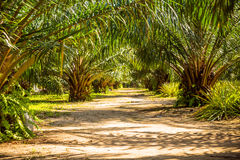 The alley with palm trees, Thailand Royalty Free Stock Photography