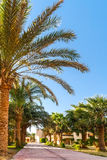 Alley with palm trees on a tropical resort in Egypt Stock Images
