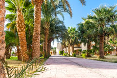 Alley with palm trees on a tropical resort in Egypt Stock Photos