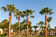 Alley with palm trees on a tropical resort in Egypt Royalty Free Stock Photo