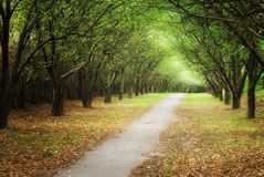 Alley in park. Alley in the autumn park Stock Photography