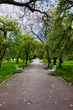 Alley in a park Royalty Free Stock Image