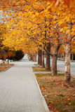 Alley in the park. Under the autumn trees Stock Photo