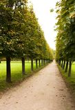 Alley in park, Arkhangelskoe Stock Image