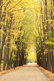 Alley in the park in autumn Stock Image