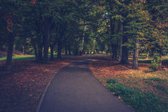 The alley in the park. The alley in autumn park Royalty Free Stock Image