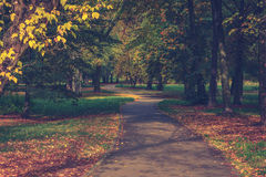 The alley in the park. The alley in autumn park Royalty Free Stock Photography