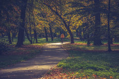 The alley in the park. The alley in autumn park stock image