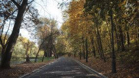 Alley in the park in autumn royalty free stock image