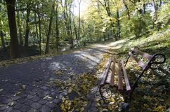 Alley at the park autumn Lviv royalty free stock image