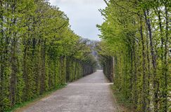 Alley in park, Bayreuth, Germany. Alley in Hermitage park, Bayreuth, Germany Royalty Free Stock Images