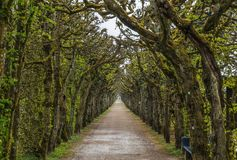 Alley in park, Bayreuth, Germany. Alley in Hermitage park, Bayreuth, Germany Stock Photos