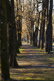 Alley in the park Royalty Free Stock Photography