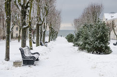 Alley in the park of the city  in winter Royalty Free Stock Photo