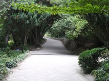 The alley in the park with dense tall green bushes and trees bent over the paved path stock images