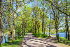 Alley in the park on Elagin island in spring, Saint-Petersburg, Russia Royalty Free Stock Photo