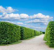 Alley in the Park with exactly topiary trees Stock Photos
