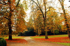 Alley in the park in the fall Royalty Free Stock Photography