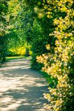 An alley in a park with fresh spring leaves glowing in sinset li royalty free stock images