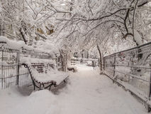 Alley in park, frozen time Royalty Free Stock Photos