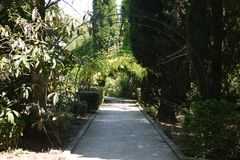 The alley in the park is among the green scenic nature with a wire arch made by hand. A beautiful place for walking with. A day off. . For your design Royalty Free Stock Images