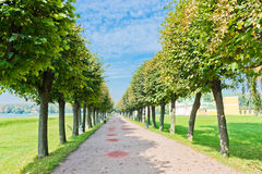 Alley in The Park of Kuskovo. Moscow. Stock Images