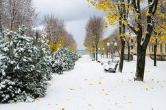 Alley in the Park later in the autumn. Snow storm Royalty Free Stock Images