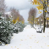 Alley in the Park later. Snow storm Stock Images
