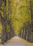 The alley in the park is lined with trees stock images
