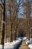 Alley in the park. Nice path in the park royalty free stock image