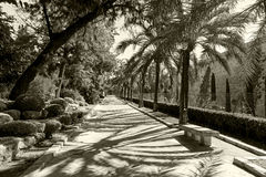 Alley in the park of Palma de Mallorca. The deserted alley in the seaside town park on a sunny day. On either side flaunt various plants Royalty Free Stock Photo