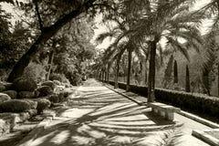 Alley in the park of Palma de Mallorca Royalty Free Stock Photo