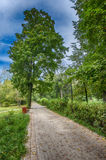 Alley in the Park. Path in the Park near the trees Royalty Free Stock Photography