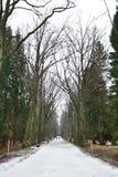 Alley in park, Pavlovsk Royalty Free Stock Photos