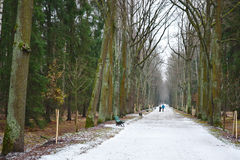 Alley in park, Pavlovsk Royalty Free Stock Image
