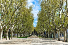 Alley in the park of Perpignan. France Stock Images