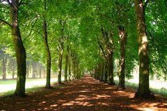 Alley in Park. Potsdam Palace, Germany Stock Photos