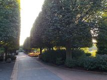 Alley in a park. Alley in a quiet park with trimmed trees Royalty Free Stock Photo