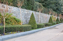 Alley in the park with sculpted bushes. In high quality Royalty Free Stock Photos