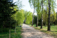 Alley in a park in spring Stock Photo
